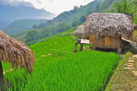 Hmong Mountain Retreat homestay Sapa